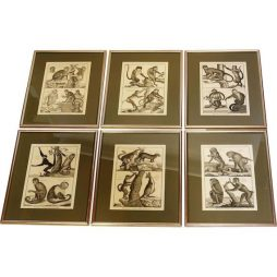 Historic set of Zoological Engravings - POA
