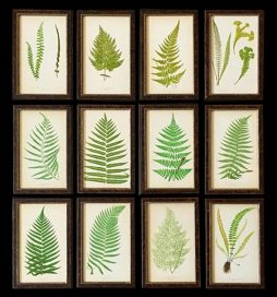 A Superb Set of 12 Ferns by E.J. Lowe