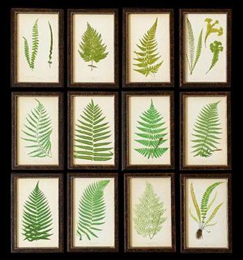 A Superb Set of 12 Ferns by E.J. Lowe