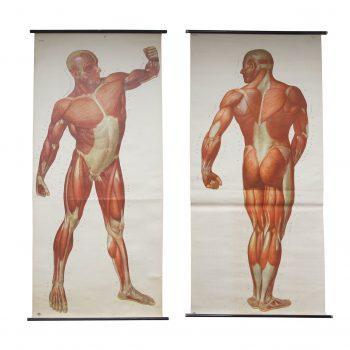 ANATOMICAL PRINTS – MEDICAL STUDIES