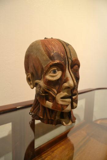 Antique Anatomical Head Model