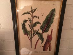 Antique 18th Century Pictures Hand Coloured Botanical Plates