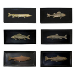 A set of 6 bronze freshwater fish mounted on black mahogany wooden frame